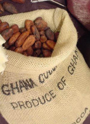 Cacao300